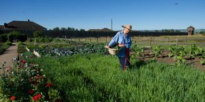 Gardening For The Soul: Granny's Guide to Self-care